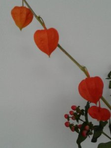 Oranje lampion (4)